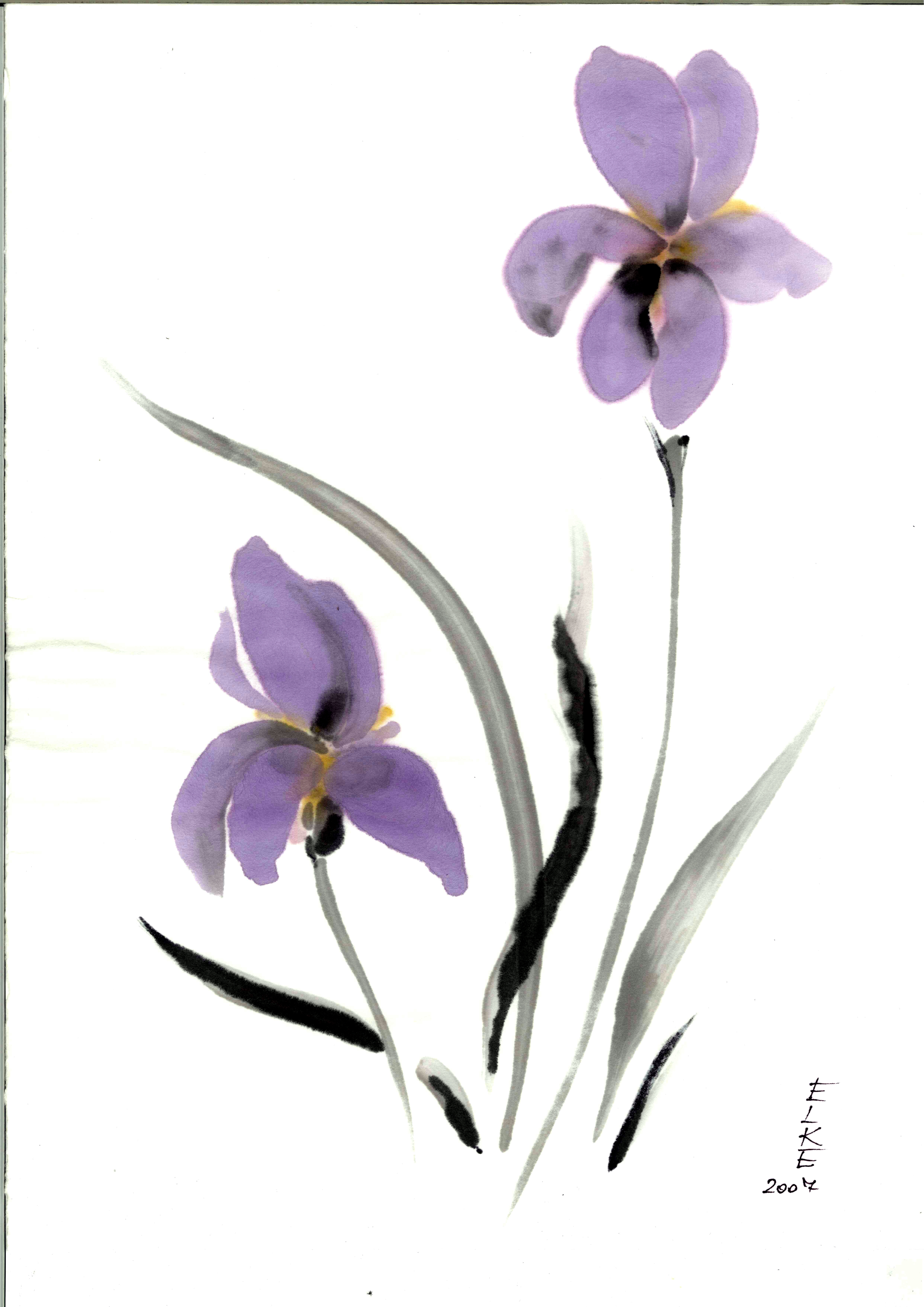 Iris Sumi-e Malerei
